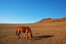 Free Horse Royalty Free Stock Image - 5384406