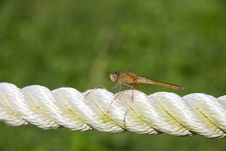 Dragonfly On Rope Stock Photos