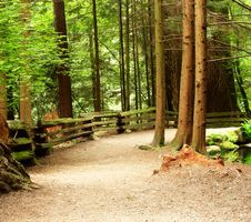 Free Forest Royalty Free Stock Photos - 5385068