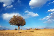 Free Young  Tree Stock Photos - 5386383