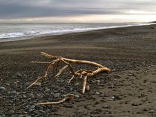 Drift Wood On Evening  Ocean Beach Royalty Free Stock Photos