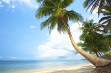 Free Tropic Coast Royalty Free Stock Images - 5386809