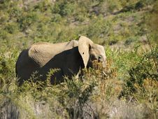 Free Elephant With Hole In The Ear Royalty Free Stock Photography - 5386857