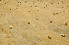 Free Field Of Bailed Hay Stock Photo - 5387190