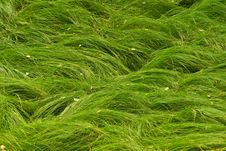 Free Green Grass Stock Photography - 5387602