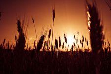 Free Sunset At Field Stock Photo - 5388500