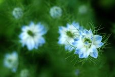 Free Blue Flower Royalty Free Stock Images - 5388719