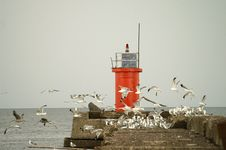 Free Seagulls Flying Near A Beacon. Royalty Free Stock Photo - 5389435