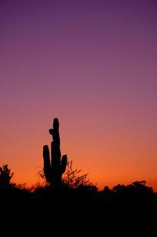 Free Saguaro Stock Images - 5389534