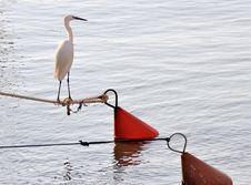 Free Heron Stock Images - 5389574