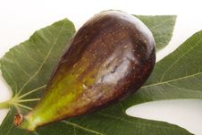 Ripe Fig Stock Images