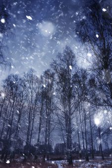 Winter Forest And Snowfall Royalty Free Stock Image