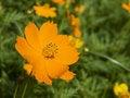 Free Orange Flower Royalty Free Stock Images - 5392939