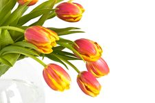 Free Beautiful Bouquet Of Tulips Stock Images - 5390014