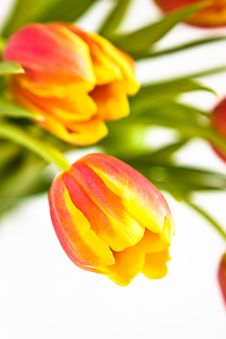 Free Tulips, Close-up Stock Photo - 5390030