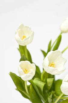 Free Bouquet Of White Tulips Stock Photography - 5390112