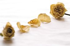 Free Dry Roses Stock Photography - 5390582