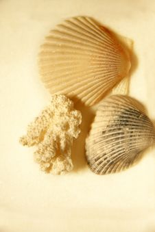 Free Seashells Royalty Free Stock Photo - 5390755
