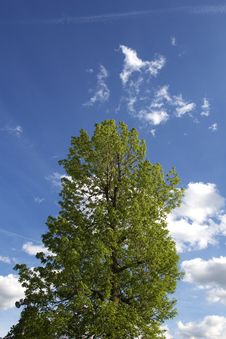 Free Top Of Tree With Sky Royalty Free Stock Image - 5390846