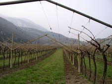 Free Vineyard Royalty Free Stock Photo - 5390965