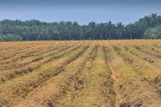 Free Land Cultivation Series 1 Royalty Free Stock Images - 5392649