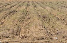 Free Land Cultivation Series 2 Stock Photo - 5392660