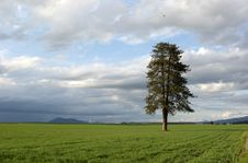 Free Tree In A Farm Field. Royalty Free Stock Images - 5392709