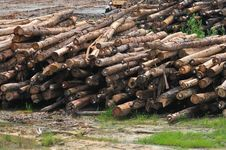 Free Timber Sawmill Series 2 Royalty Free Stock Photo - 5392725