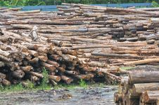 Free Timber Sawmill Series 4 Royalty Free Stock Photography - 5392757