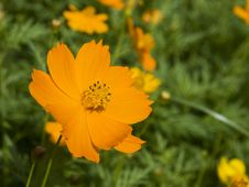 Free Orange Flower Royalty Free Stock Images - 5392939