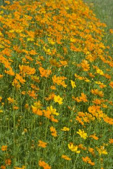 Free Field With Orange Flowers Stock Image - 5393071