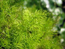 Free Grass Royalty Free Stock Photos - 5393418