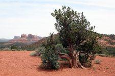 Free Sedona Scenic Desert View Royalty Free Stock Photo - 5394485