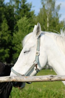 Free Head Of A White Horse Royalty Free Stock Photos - 5394618
