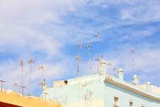 Free Antennas And Seagull Stock Photos - 5395933