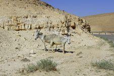Free Donkeys In Judean Desert Stock Photos - 5397093