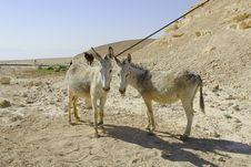 Free Donkeys In Judean Desert Royalty Free Stock Photography - 5397267
