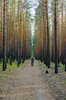 Free Woman Is Cycling In Pine Forest Royalty Free Stock Photos - 5398558