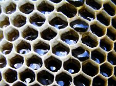 Free Honey In Honeycombs. Stock Images - 5398614