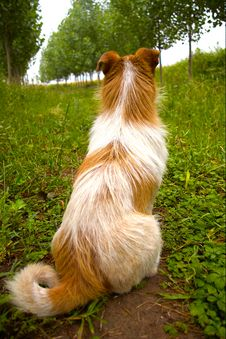 Free Dog Royalty Free Stock Photos - 5398628