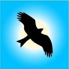 Free Eagle Emblem Royalty Free Stock Photography - 5399577