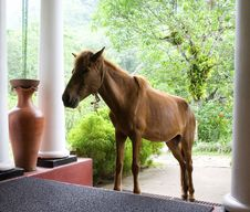 Free Horse On The Verandah With Columns Stock Photos - 5399833