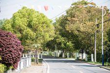 Free Roadside Trees Stock Photography - 53957212