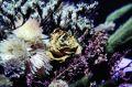 Free Drying Flower Stock Photos - 546363