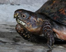 Free Turtle 2 Stock Photo - 540660