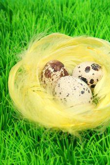 Free Bird Nest Stock Photography - 542542