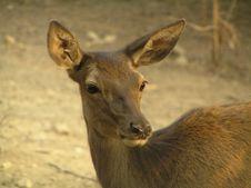 Free Deer Stock Images - 542654