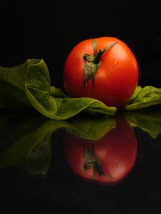 Free Perfect Tomato Stock Image - 543251