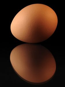 Free Real Egg Stock Photos - 543253