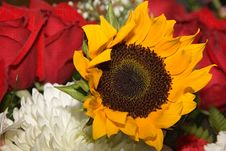 Free Flowers 011 Sunflower Stock Photography - 543582